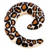 Acrylic Expander  Spiral Leopard